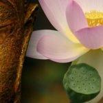 handling og meditation