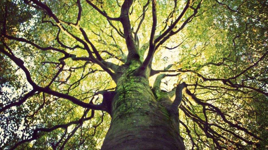 The Path of Regeneration through Ethics